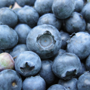 8 Great Reasons to Eat Blueberries