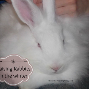 Tips on Raising Rabbits in the Winter