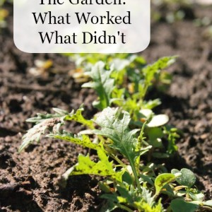 Our Garden: What Worked and What Didn't