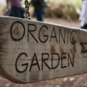 10 Reasons to Garden Organically
