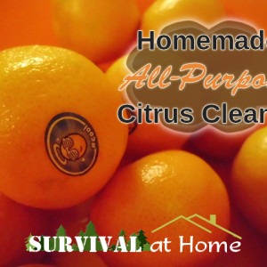 Homemade All-Purpose Citrus Cleaner