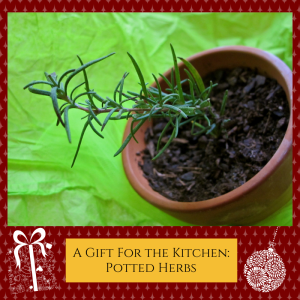 Give the Gift of Potted Herbs