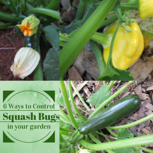 6 Ways to Control Squash Bugs in Your Garden