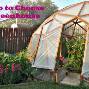 Help to Choose a Greenhouse