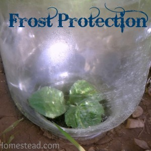 2 favorite ways to protect plants from frost