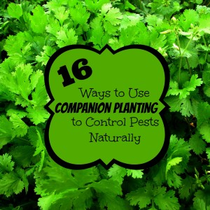 16 Ways to Use Companion Planting to Control Pests Naturally