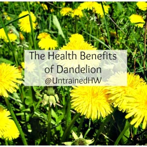 Uses and Benefits of Dandelion