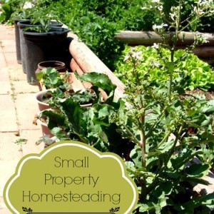 Small Property Homesteading