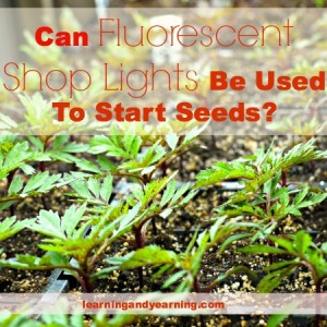 Ask the Gardener: Can Fluorescent Shop Lights Be Used To Start Seeds?