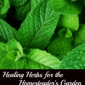 Healing Herbs to Plant in Your Garden