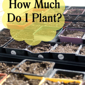 How Much Do I Plant