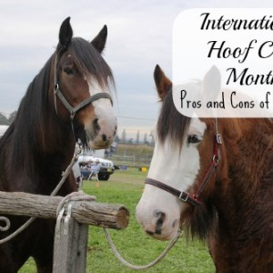 Hoof Care Month: The Pros and Cons of Horseshoes