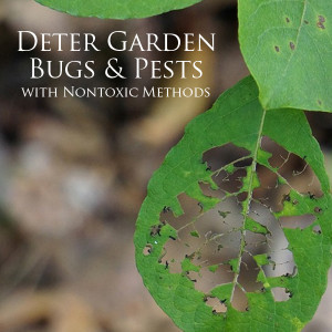 Deter Pests from your Garden