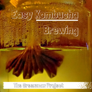 Easy Kombucha Brewing