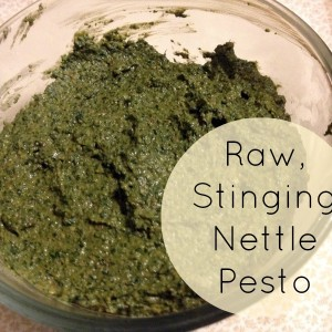 How to Safely Make Raw Stinging Nettle Pesto