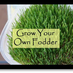 Grow Your Own Fodder