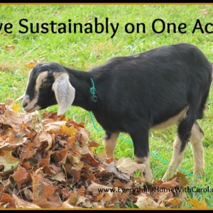 Living Sustainably on One Acre or Less