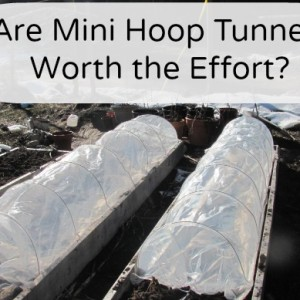 Mini Hoop Tunnels-are they worth it?