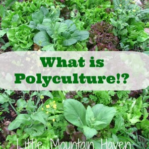 What is Polyculture?