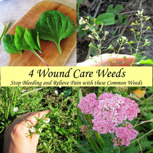 4 Weeds for Wound Care