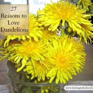 27 Reasons to Love Dandelions