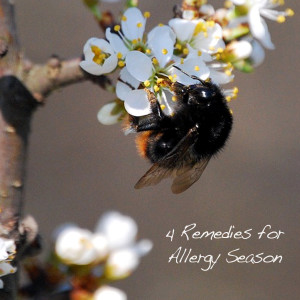 4 Remedies for Allergy Season
