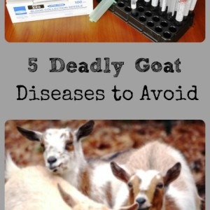 5 Deadly Goat Diseases to Avoid