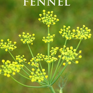 Benefits of Fennel: Relief for You-Know-What