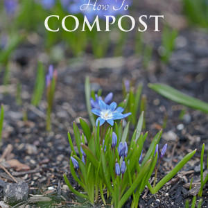 How to Compost: Getting Started Guide