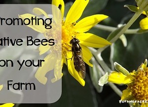 Promoting Native Bees on Your Farm