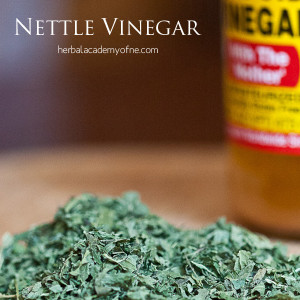 Stinging Nettle Vinegar and More