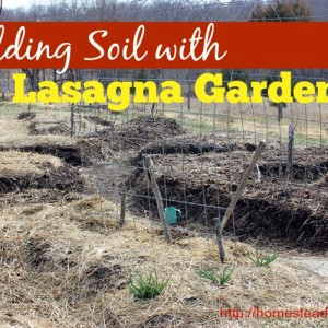Building Soil with Lasagna Gardening