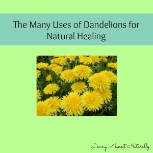 The many uses of Dandelions in Natural Healing
