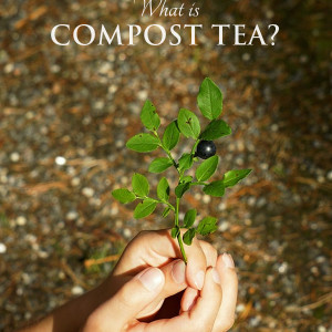 What is Compost Tea? Plants Drink Tea Too!