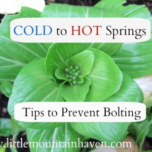 Cold to Hot Springs: Tips to Prevent Bolting