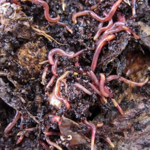 Comparing Methods of Vermicomposting