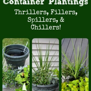 Creating Beautiful Container Plantings