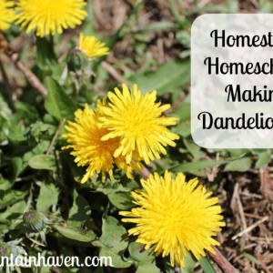 Homestead Homeschool: Making Dandelion Oil