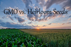 Heirloom vs. GMO Seeds: What's the Difference?
