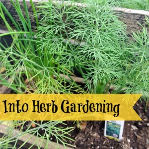 Step into Herb Gardening