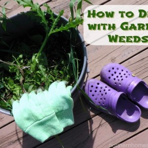 5 Easy Steps to Better deal with Garden Weeds