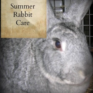 Summer Rabbit Care