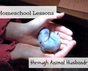 Teaching Through Animal Husbandry