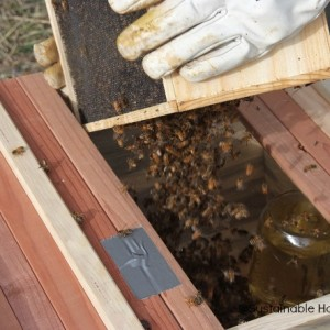 How to install a bee package in a top-bar hive