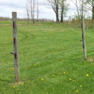Two Minute Trick To Pulling Up Fence Posts