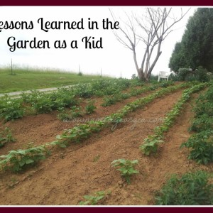 Lessons Learned in the Garden as a Kid
