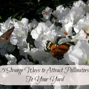 Strange Ways to Bring Pollinators to Your Garden