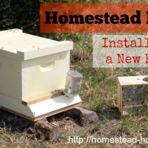 Homestead Beekeeping: Installing a New Hive