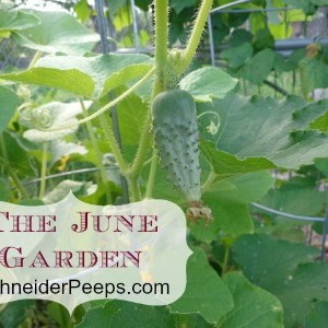The June Garden in zone 9