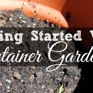 Getting Started With Container Gardening
